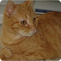 Adopt A Pet :: Cabot