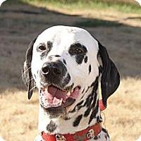 Adopt A Pet :: Boomer - Newcastle, OK