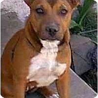 Adopt A Pet :: T.C.(Too Cute) - dewey, AZ