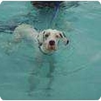 Adopt A Pet :: MOBIE - Inver Grove Heights, MN