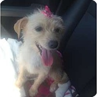 Adopt A Pet :: Maggie - Oceanside, CA