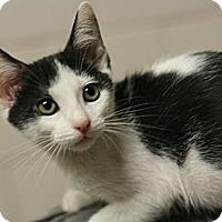 Adopt A Pet :: Marcela - Canoga Park, CA