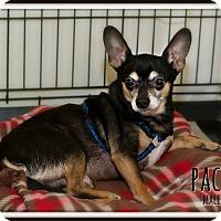 Adopt A Pet :: Paco - Fallbrook, CA