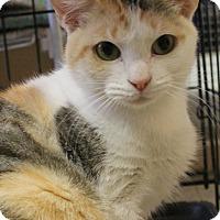 Domestic Shorthair Cat for adoption in Richand, New York - Ella