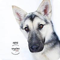 Adopt A Pet :: Aero - Castaic, CA