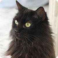 Adopt A Pet :: Tamsin the Stunning Tiffany - Brooklyn, NY