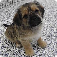Adopt A Pet :: Whitney - Washington, PA