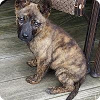 Adopt A Pet :: Ruby - New Oxford, PA