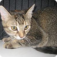 Adopt A Pet :: Vegas - Dallas, TX