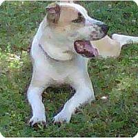 Adopt A Pet :: Oscar - Little River, SC