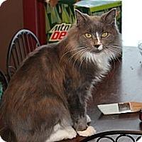 Adopt A Pet :: Luna&MJ - Clay, NY