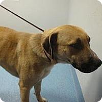 Adopt A Pet :: Cracker Jack - Gainesville, FL