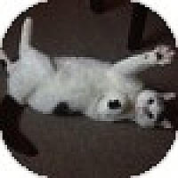 Adopt A Pet :: Jeremias - Vancouver, BC