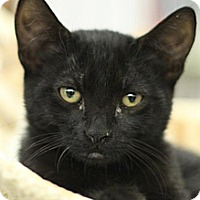 Adopt A Pet :: Moe - Sacramento, CA