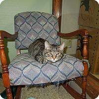 Adopt A Pet :: Everette - Medina, OH