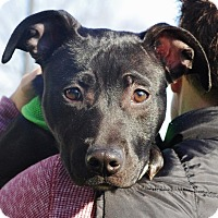Adopt A Pet :: Barley - Reisterstown, MD