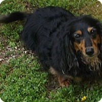 Adopt A Pet :: Piper - Georgetown, KY