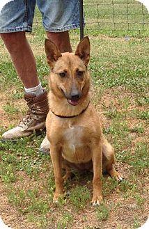 Shepherd (Unknown Type) Mix Dog for adoption in Texico, Illinois - Midget - 35 lbs