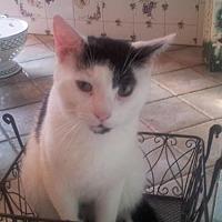 Adopt A Pet :: Shane - Hazlet, NJ
