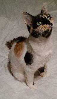 Domestic Mediumhair Cat for adoption in Rosamond, California - Autumn