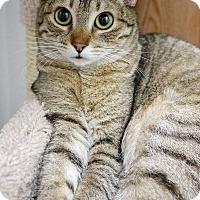 Adopt A Pet :: Bugly - Montclair, CA