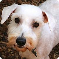 Adopt A Pet :: Eva - Norwalk, CT