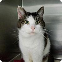 Adopt A Pet :: Sunshine - Elyria, OH