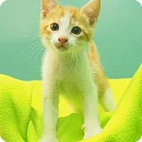 Adopt A Pet :: Cheddar - New Orleans, LA