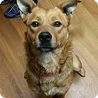 Adopt A Pet :: Lola - Lisbon, OH