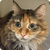 Adopt A Pet :: Marbles - Salisbury, MA