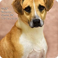 Adopt A Pet :: Belk - Newnan City, GA