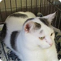 Adopt A Pet :: Ulysses - Euclid, OH