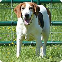Adopt A Pet :: Clarabelle - Marlinton, WV