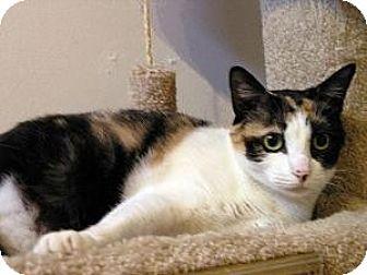 Calico Cat for adoption in Lilburn, Georgia - Claudia