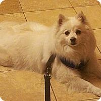 Adopt A Pet :: NANUK - Hesperus, CO