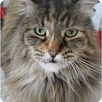 Adopt A Pet :: Sesame - Portland, OR