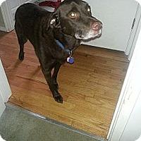 Adopt A Pet :: Hershey - Puyallup, WA