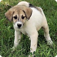 Adopt A Pet :: Austin - Staunton, VA