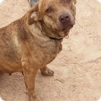 Adopt A Pet :: Cinnamon - Kingsland, TX
