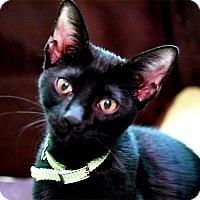 Adopt A Pet :: Bernie - N. Billerica, MA