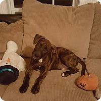 Adopt A Pet :: Max - Franklin, VA