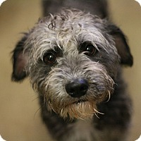 Adopt A Pet :: Stevie - Canoga Park, CA