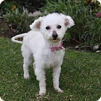 Adopt A Pet :: MARGIE - Newport Beach, CA