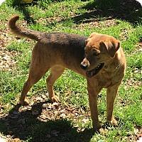 Adopt A Pet :: Freda - Boerne, TX