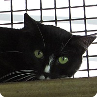 Adopt A Pet :: JANETTE - Jackson, MO