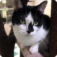 Adopt A Pet :: NALA - Toledo, OH
