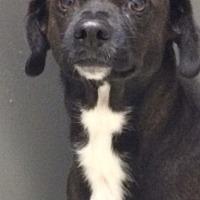 Adopt A Pet :: Cindy - St. Louis, MO