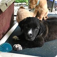 Adopt A Pet :: Comet - Hohenwald, TN