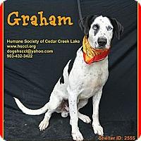 Adopt A Pet :: Graham - Plano, TX