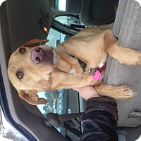 Adopt A Pet :: Maradona - Homewood, AL